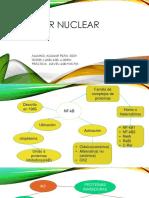 Factor Nuclear Kappa
