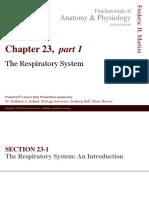 Respiratory pada tubuh manusia