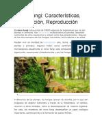 Reino Fungi.docx