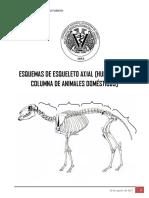 2 Osteologia Axial Columna Fmvz 1