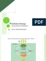 Cellular Energy 2