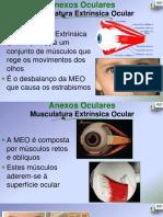 Opto 5 Musculos Extra Oculares