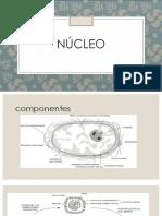 núcleo biología celular