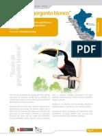 Tucan_de_garganta_blanca_ficha.pdf