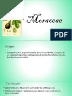Moraceae1 (1)