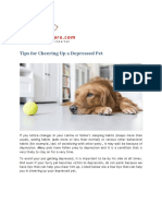 Tips to Cheer Up Depressed Pets