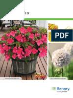 Begonia Benarensis (ES_INT_Technical_Guide).pdf