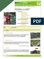 Cultivar en maceta