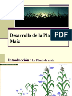 DESARROLLO DE LA PLANTA DE MAIZ