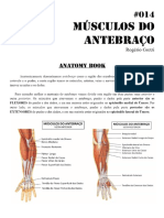 Músculos Do Antebraço