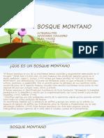 BOSQUE MONTANO.pptx
