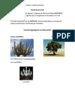 PLANTAS DE CHILE.docx