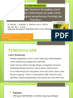PPT Helicoverpa Zea