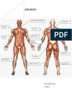 MUSCLES OF THE BODY.doc