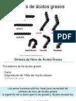 14. Biosíntesis Ácidos Grasos