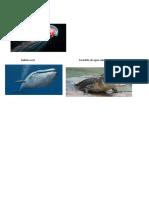 Ejemplos de Sustantivos Colectivos e Individuales