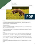lamalteriadelcervecero.es-Zorrino Defecto en la cerveza.pdf
