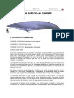 ballena_azul.pdf