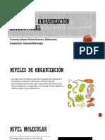Niveles de Organización Estructural
