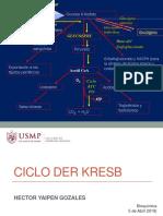 Ciclo de Kresb Usmp II