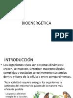 Bioquímica - BIOENERGÉTICA