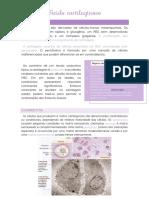 Tecido cartilaginoso-histologia