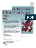 Vitamin c Deficiency Scurvy in Guinea Pigs