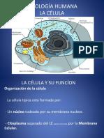 Clase Fisiologia II