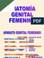 ANATOMÍA GENITAL2011