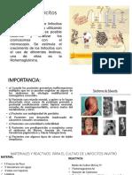 Cultivo de Linfocitos