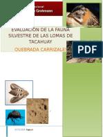 Evaluacion de La Fauna Silvestre en Quebrada Carrizales-junio 2012