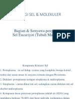 2. b.sp Sel Tubuh Manusia H Rev.pptx
