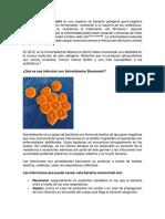 Acinetobacter baumannii