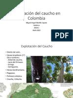 Unidad 6 Explotación del Caucho en Colombia - Miguel A Murillo