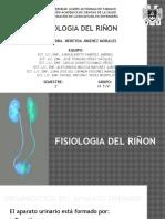 Fisiologia Del Riñon
