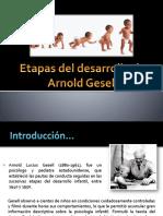 122633255-Etapas-Del-Desarrollo-de-Arnold-Gesell.pptx