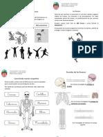 Guía cuerpo humano.pdf