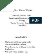 Overview of Prenatal Developmental Events