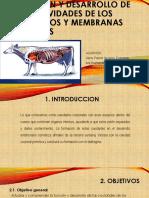 Funcion y Desarrollo de Las Cavidades de Los Organos