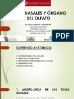 6.FOSAS NASALES Y ÓRGANO DEL OLFATO.pdf