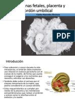 Plancenta Membranas y Cordon