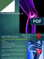Rodilla Anatomia