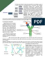 Inmunoglobulinas, Fagocitosis y Inflamacion