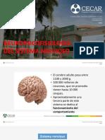 Neuropsicologia Del Sist. Nervioso