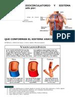 Aparato Cardiocirculatorio y Sistema Vascular