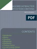 aggregatibacteractinomycetemcomitans-pdf