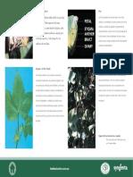 p10.en.es.pdf