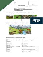 Guía de Aprendizaje cadena trofica..docx