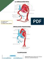 diapositivas cardiopatias congenitas