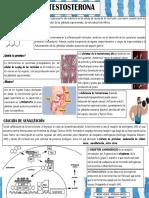 TESTOSTERONA 2.pdf